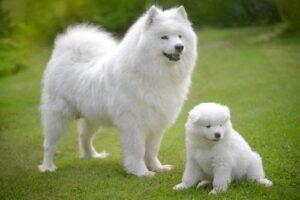 nama anjing betina lucu