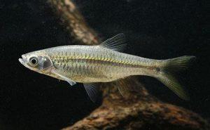 Analisa Keuntungan Budidaya Ikan Seluang
